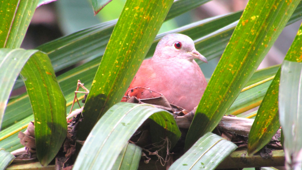 Cuento La pajarita y su nido